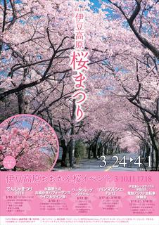 18izukogen-sakuramatsuri-1.jpg